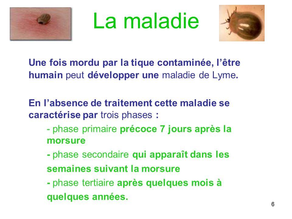 6 La maladie Une fois mordu par la tique contaminée, lêtre humain peut développer une maladie de Lyme. En labsence de traitement cette maladie se cara