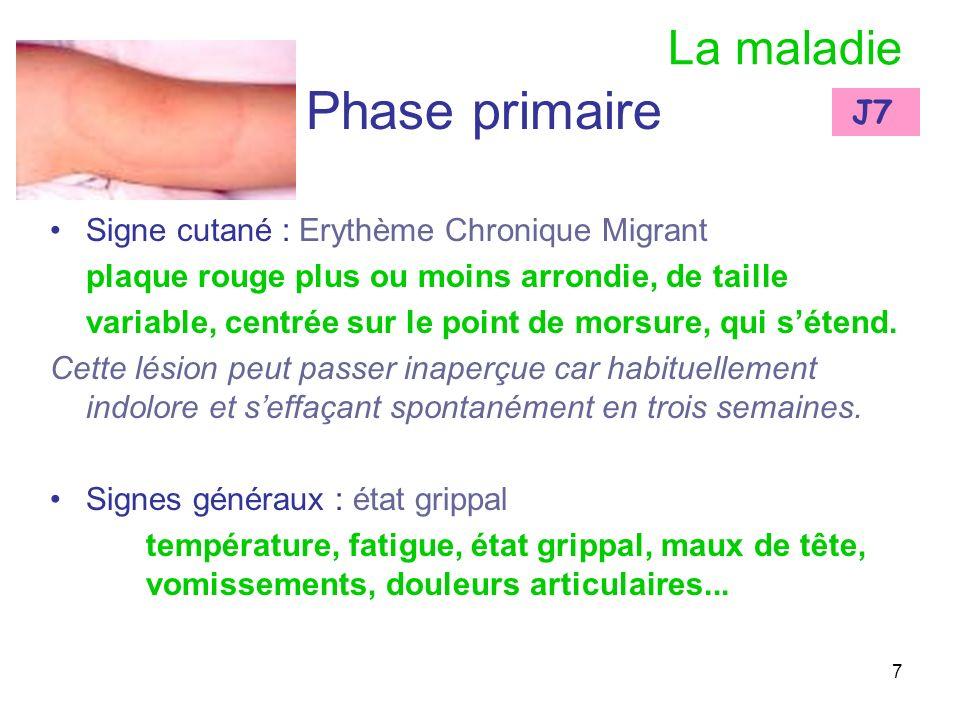 7 La maladie Phase primaire Signe cutané : Erythème Chronique Migrant plaque rouge plus ou moins arrondie, de taille variable, centrée sur le point de