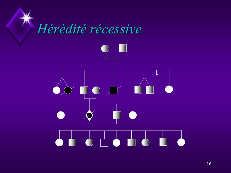 16 Hérédité récessive