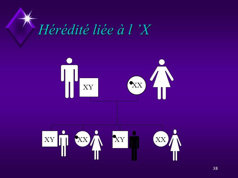 38 Hérédité liée à l X XYXX XY XX XY