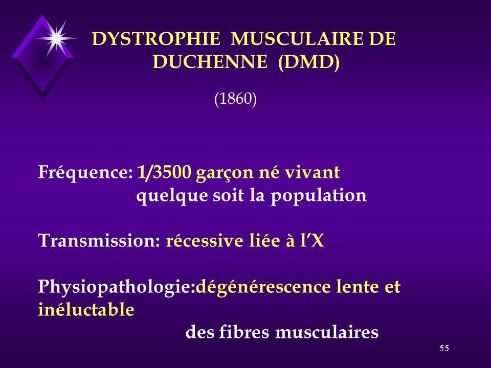 55 DYSTROPHIE MUSCULAIRE DE DUCHENNE (DMD) Fréquence: 1/3500 garçon né vivant quelque soit la population Transmission: récessive liée à lX Physiopatho