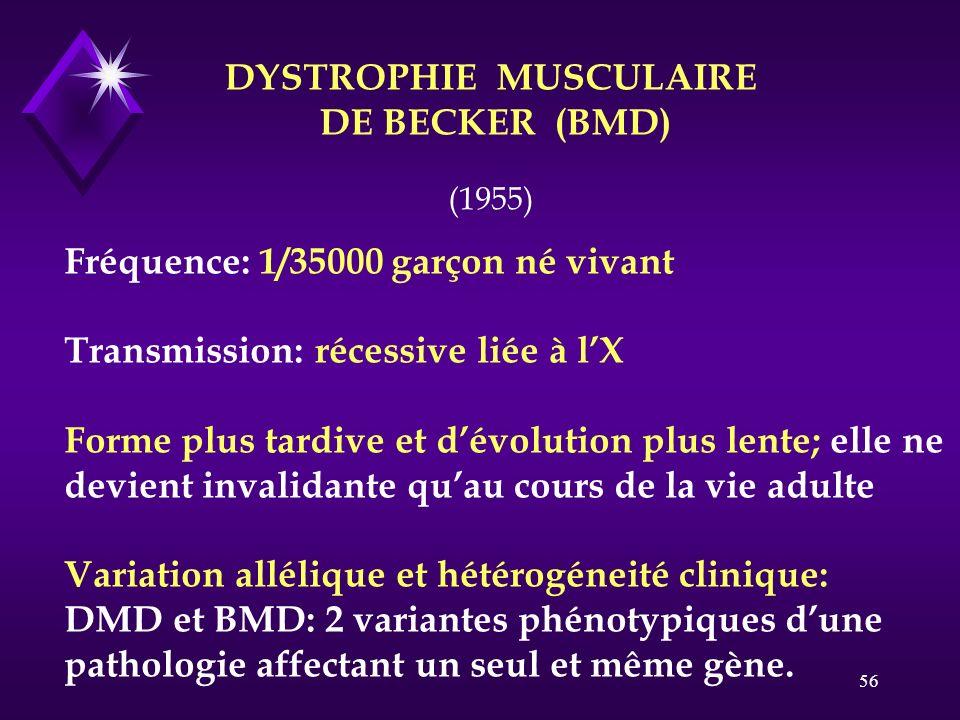 56 DYSTROPHIE MUSCULAIRE DE BECKER (BMD) Fréquence: 1/35000 garçon né vivant Transmission: récessive liée à lX Forme plus tardive et dévolution plus l
