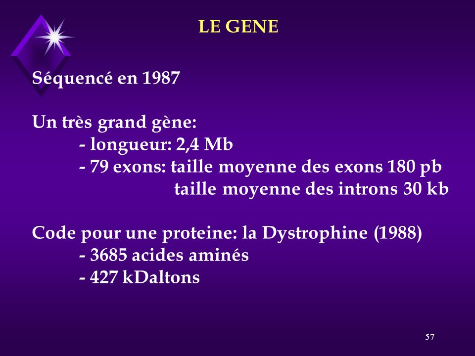 57 LE GENE Séquencé en 1987 Un très grand gène: - longueur: 2,4 Mb - 79 exons: taille moyenne des exons 180 pb taille moyenne des introns 30 kb Code p