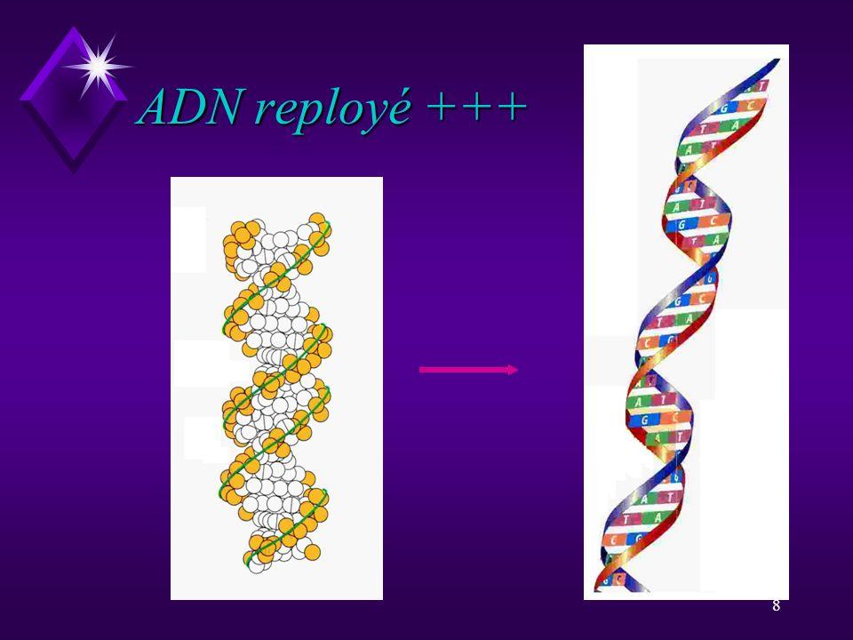 8 ADN reployé +++