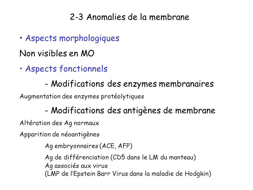 2-3 Anomalies de la membrane Aspects morphologiques Non visibles en MO Aspects fonctionnels - Modifications des enzymes membranaires Augmentation des