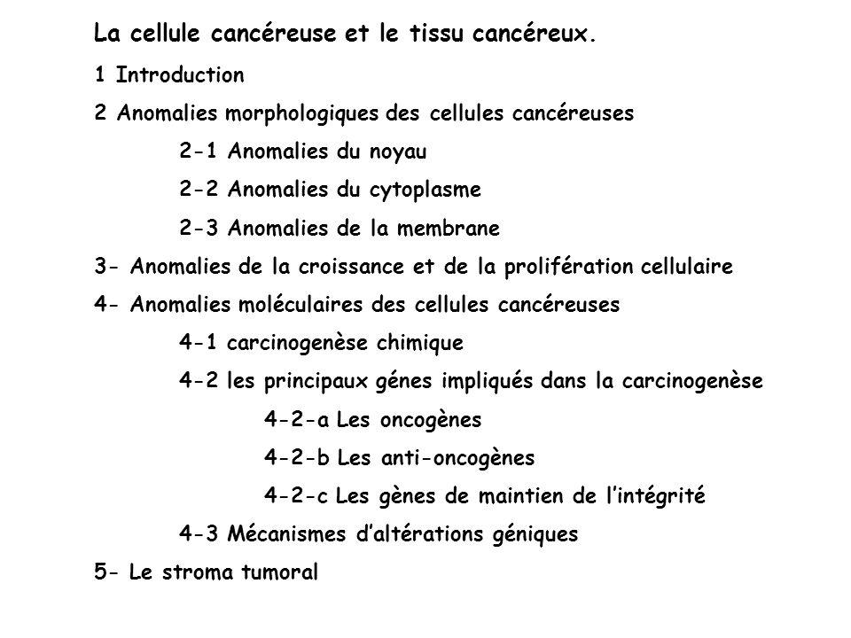 2-2 Anomalies du cytoplasme Cytosquelette Conservation avec anomalies de répartition dans la cellule cancéreuse Détection des filaments intermédiaire (cytokératine) en IHC précise le tissu dorigine de la tumeur Système sécrétoire Aspect morphologiques Anisocytose Vacuole cytoplasmique dans les adénocarcinomes mucosécrétants Cytoplasme clair (glycogène) dans les AK à cellules claires du rein Aspects qualitatifs et quantitatifs 1 Variations quantitatives des sécrétions normales (myélome) 2 Sécrétions de substances anormales - sécrétion inappropriée dune hormone (ACTH dans les K à petites cellules du poumon) - dérépression dune synthèse de protéines de type fœtal analysable par dosage sérique ou par IHC
