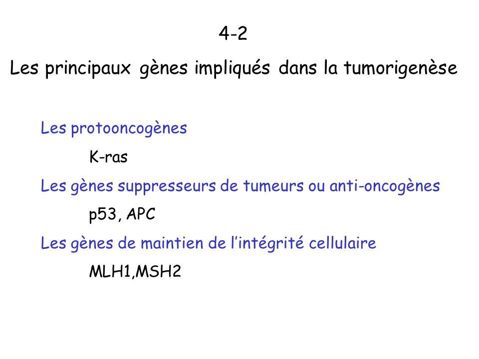 4-2 Les principaux gènes impliqués dans la tumorigenèse Les protooncogènes K-ras Les gènes suppresseurs de tumeurs ou anti-oncogènes p53, APC Les gène
