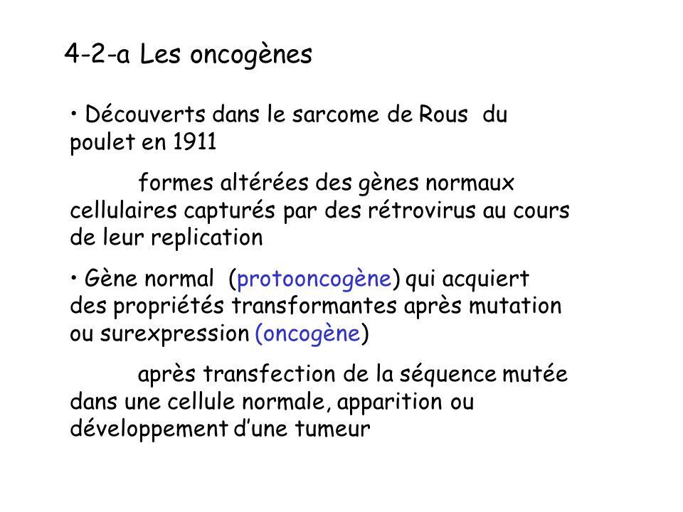 4-2-a Les oncogènes Découverts dans le sarcome de Rous du poulet en 1911 formes altérées des gènes normaux cellulaires capturés par des rétrovirus au