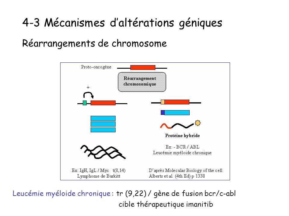 4-3 Mécanismes daltérations géniques Réarrangements de chromosome Leucémie myéloide chronique : tr (9,22) / gène de fusion bcr/c-abl cible thérapeutiq