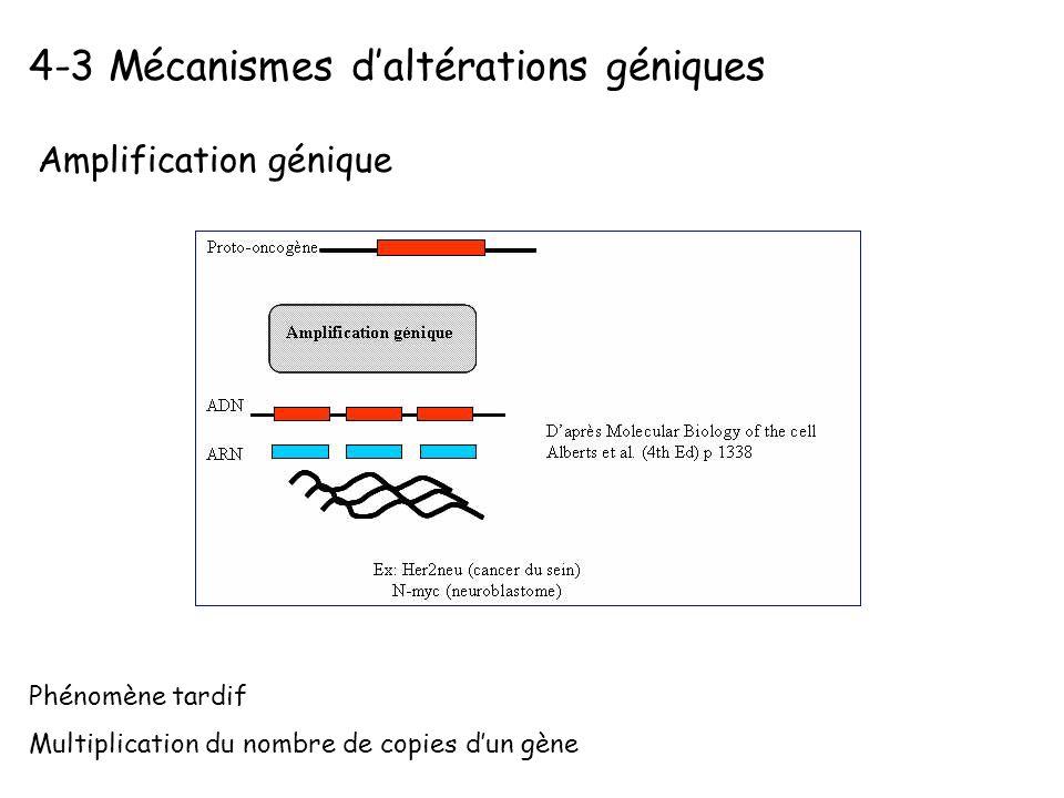 4-3 Mécanismes daltérations géniques Amplification génique Phénomène tardif Multiplication du nombre de copies dun gène