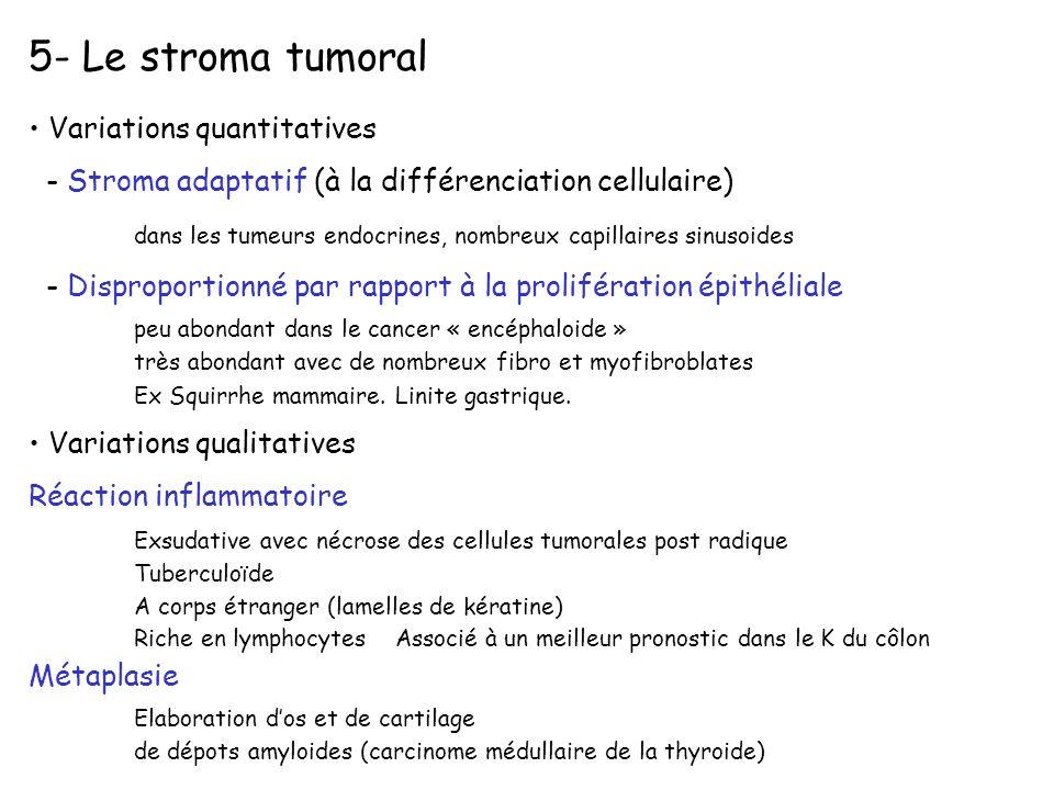 Variations quantitatives - Stroma adaptatif (à la différenciation cellulaire) dans les tumeurs endocrines, nombreux capillaires sinusoides - Dispropor