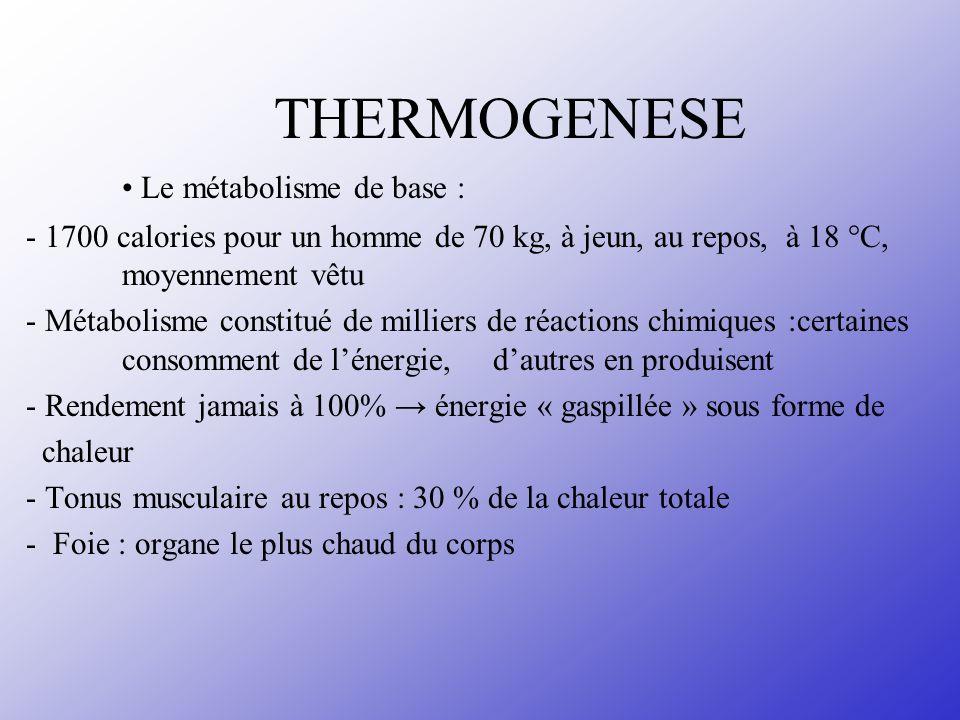 THERMOGENESE Le métabolisme de base : - 1700 calories pour un homme de 70 kg, à jeun, au repos, à 18 °C, moyennement vêtu - Métabolisme constitué de m