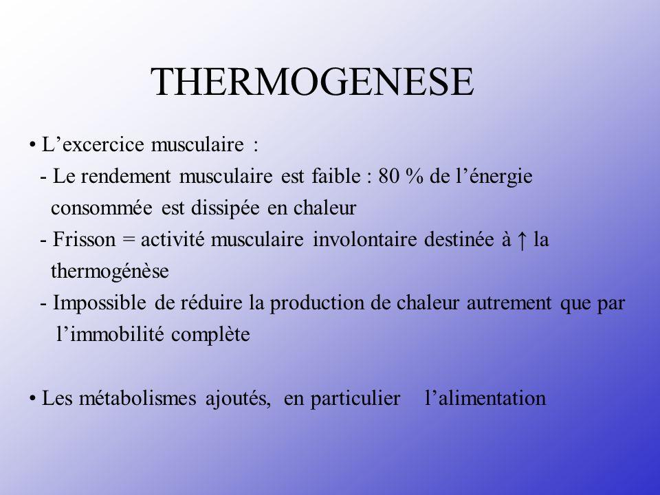 THERMOGENESE Lexcercice musculaire : - Le rendement musculaire est faible : 80 % de lénergie consommée est dissipée en chaleur - Frisson = activité mu