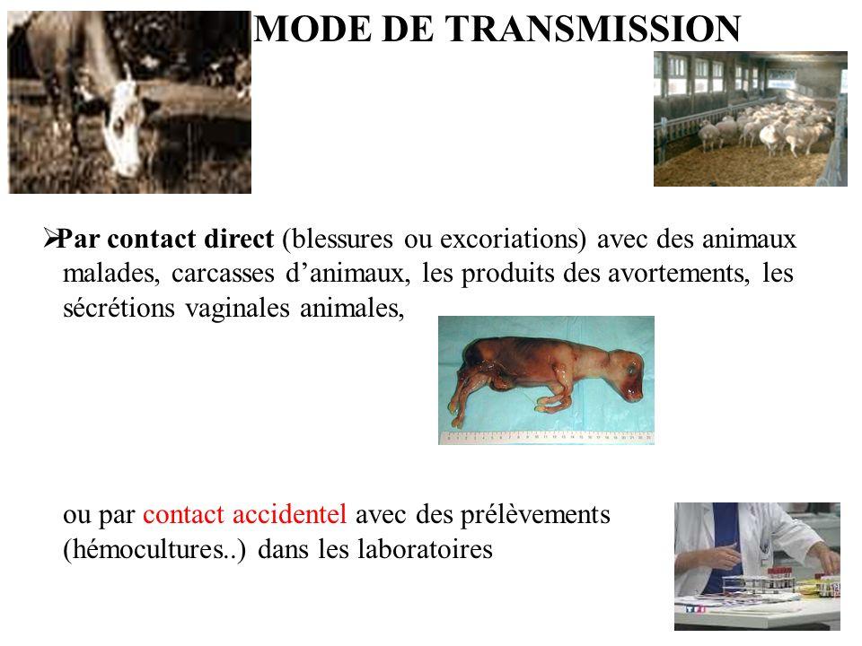 MODE DE TRANSMISSION Par contact direct (blessures ou excoriations) avec des animaux malades, carcasses danimaux, les produits des avortements, les sécrétions vaginales animales, ou par contact accidentel avec des prélèvements (hémocultures..) dans les laboratoires