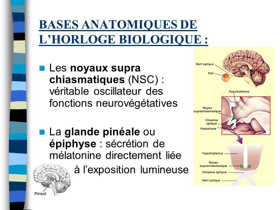 BASES ANATOMIQUES DE LHORLOGE BIOLOGIQUE : Les noyaux supra chiasmatiques (NSC) : véritable oscillateur des fonctions neurovégétatives La glande pinéa