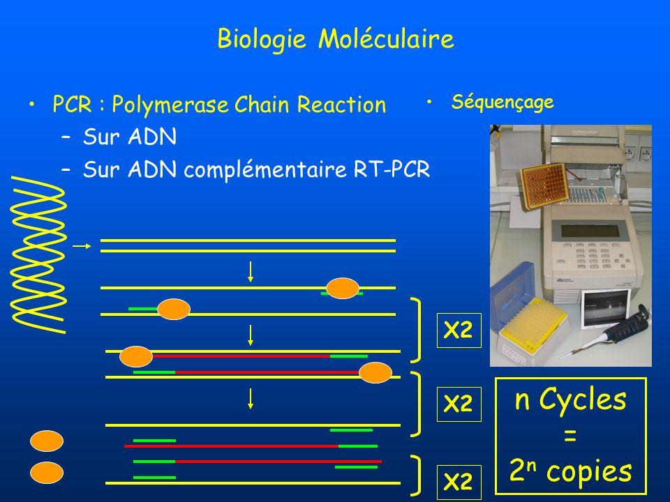 PCR : Polymerase Chain Reaction –Sur ADN –Sur ADN complémentaire RT-PCR Biologie Moléculaire X2 Séquençage X2 n Cycles = 2 n copies