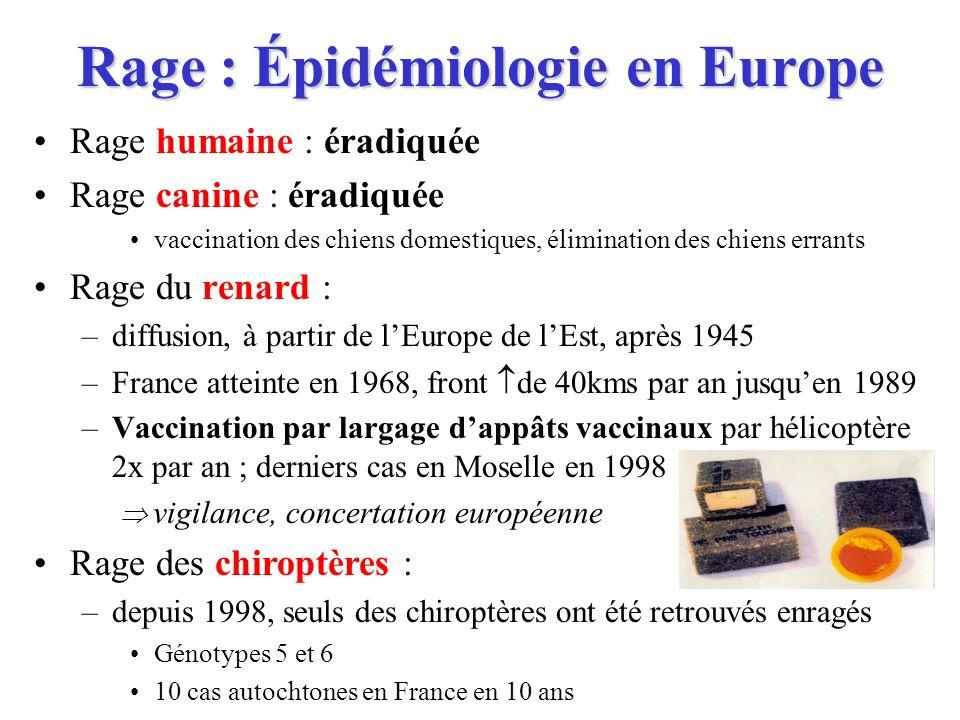 Rage : Épidémiologie en Europe Rage humaine : éradiquée Rage canine : éradiquée vaccination des chiens domestiques, élimination des chiens errants Rag