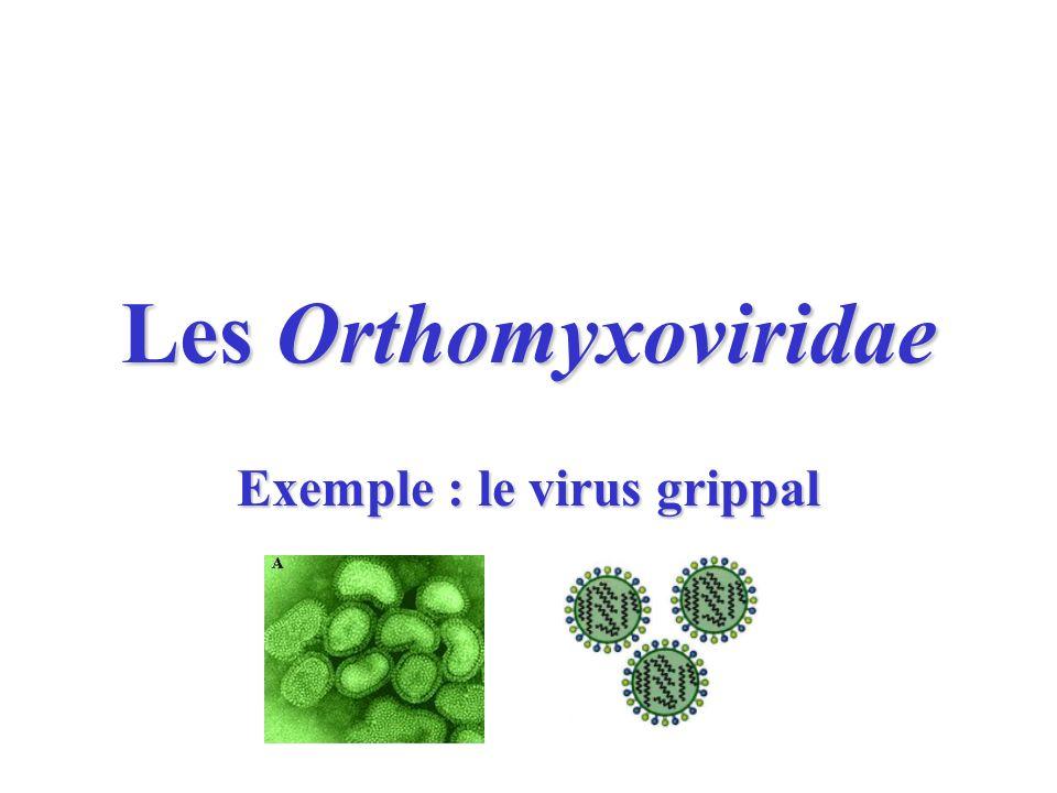 Les Orthomyxoviridae Exemple : le virus grippal
