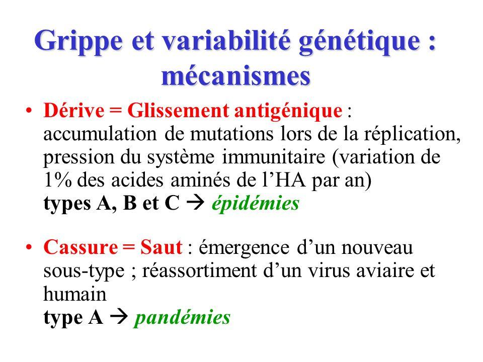 Grippe et variabilité génétique : mécanismes Dérive = Glissement antigénique : accumulation de mutations lors de la réplication, pression du système i