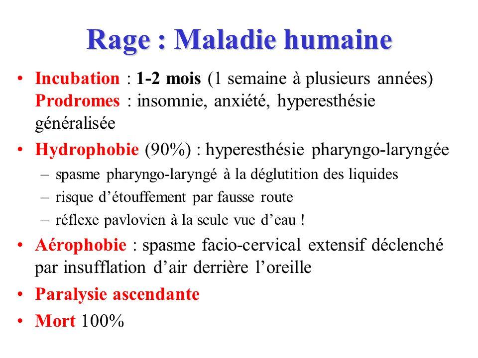 Rage humaine : Conduite à tenir Sujet mordu, premier geste : –Temps anciens : Cautériser la peau au fer rouge –Maintenant : lavage à leau savonneuse, rinçage, désinfection, parage sans suture (pour tenter déliminer linoculum viral) –Prophylaxie anti-tétanique et ATB Centre de traitement anti-rabique (72 en France) –Indications de la vaccination et de la sérothérapie –Vaccination : protège mal contre les génotypes 2, 3, 4, 5 Problème de maîtrise du risque en Afrique Justifie le typage moléculaire de toutes les souches –Vaccin inactivé ; 2 protocoles : J0-J3-J7-J14-J28 ; J0x2-J7-J21 –Sérothérapie : Immunoglobulines dorigine humaine ou équine Surveiller lanimal mordeur –Observation vétérinaire des carnivores domestiques apparemment sains –3 visites légales (J1, J8, J15) –Si décès ou abattu : envoi au Centre de Référence, diagnostic direct