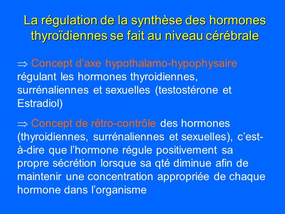 La régulation de la synthèse des hormones thyroïdiennes se fait au niveau cérébrale Concept daxe hypothalamo-hypophysaire régulant les hormones thyroi