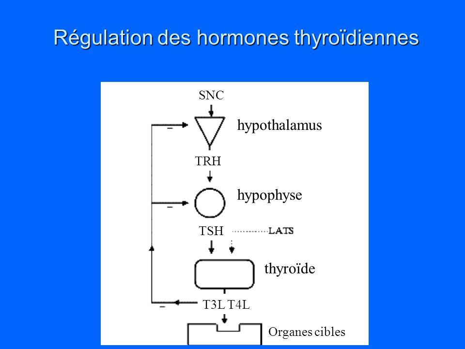 Anatomie 4 Parathyroides: 2 sup. et 2 inf. Sécrétion: PTH, hormone hypercacémiante