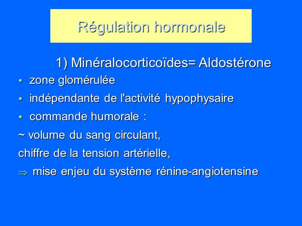 Régulation hormonale 1) Minéralocorticoïdes= Aldostérone 1) Minéralocorticoïdes= Aldostérone zone glomérulée zone glomérulée indépendante de l'activit