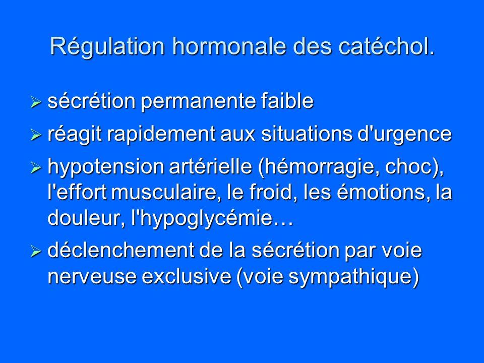 Régulation hormonale des catéchol. sécrétion permanente faible sécrétion permanente faible réagit rapidement aux situations d'urgence réagit rapidemen