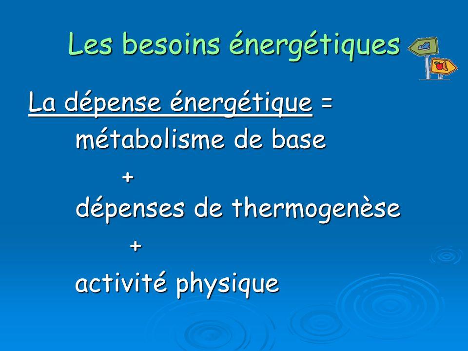 Les besoins énergétiques La dépense énergétique = métabolisme de base + dépenses de thermogenèse + activité physique