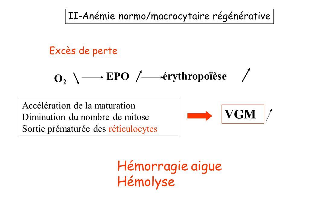 II-Anémie normo/macrocytaire régénérative Excès de perte O2O2 EPO érythropoïèse Accélération de la maturation Diminution du nombre de mitose Sortie pr