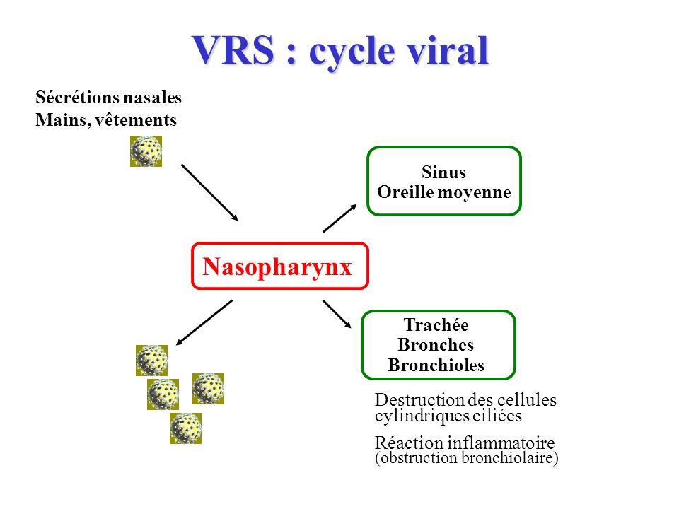 VRS : cycle viral Nasopharynx Sinus Oreille moyenne Trachée Bronches Bronchioles Sécrétions nasales Mains, vêtements Destruction des cellules cylindri