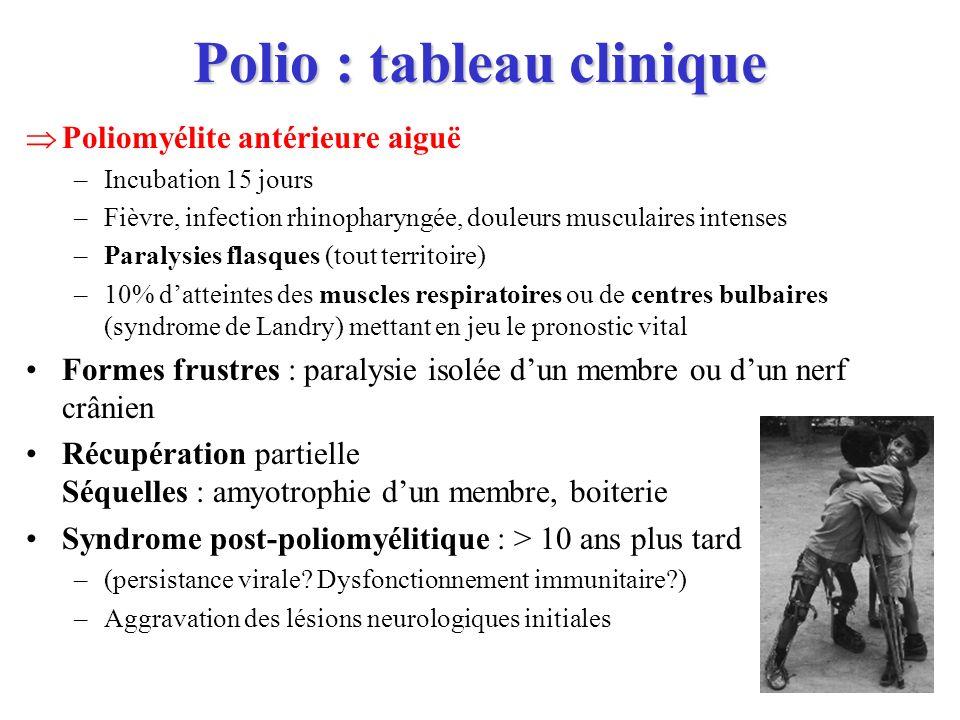 Polio : tableau clinique Poliomyélite antérieure aiguë –Incubation 15 jours –Fièvre, infection rhinopharyngée, douleurs musculaires intenses –Paralysi