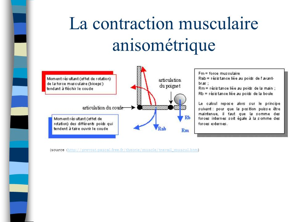 La contraction musculaire anisométrique (source :http://prevost.pascal.free.fr/theorie/muscle/travail_muscul.htm)http://prevost.pascal.free.fr/theorie/muscle/travail_muscul.htm