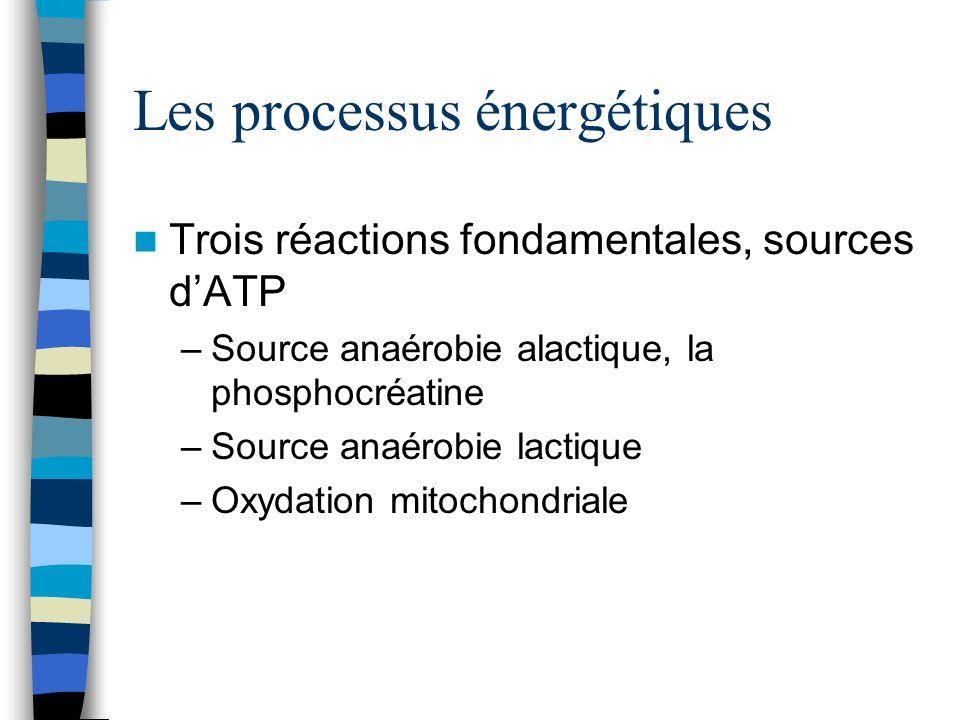 Les processus énergétiques Trois réactions fondamentales, sources dATP –Source anaérobie alactique, la phosphocréatine –Source anaérobie lactique –Oxydation mitochondriale
