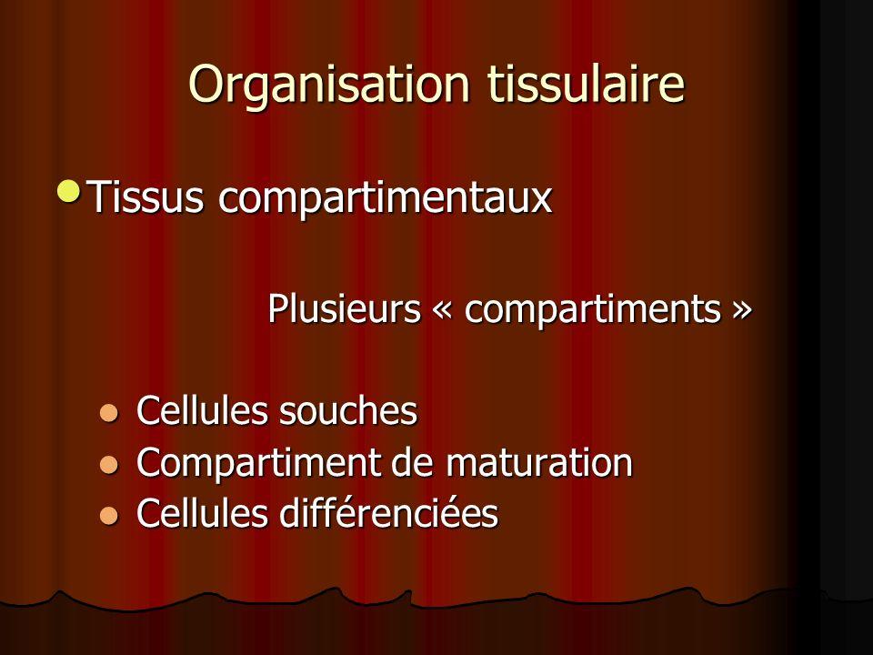 Organisation tissulaire Tissus compartimentaux Tissus compartimentaux Plusieurs « compartiments » Plusieurs « compartiments » Cellules souches Cellule