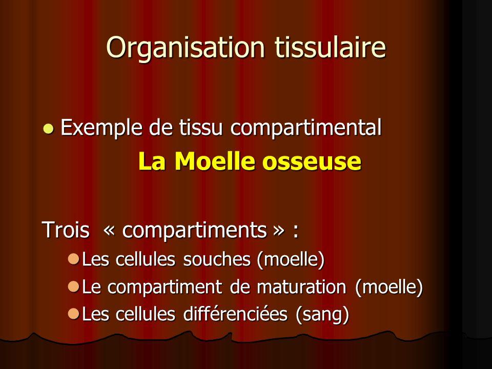 Organisation tissulaire Exemple de tissu compartimental Exemple de tissu compartimental La Moelle osseuse La Moelle osseuse Trois « compartiments » :