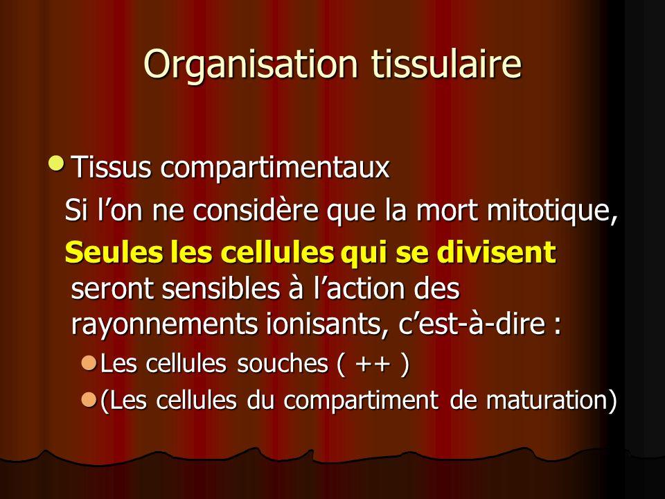 Organisation tissulaire Tissus compartimentaux Tissus compartimentaux Si lon ne considère que la mort mitotique, Si lon ne considère que la mort mitot