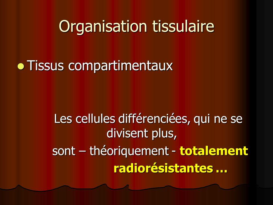 Organisation tissulaire Tissus compartimentaux Tissus compartimentaux Les cellules différenciées, qui ne se divisent plus, Les cellules différenciées,