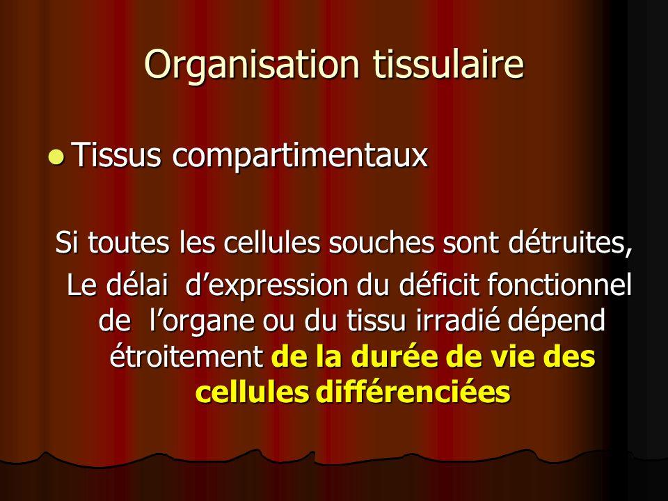 Organisation tissulaire Tissus compartimentaux Tissus compartimentaux Si toutes les cellules souches sont détruites, Si toutes les cellules souches so