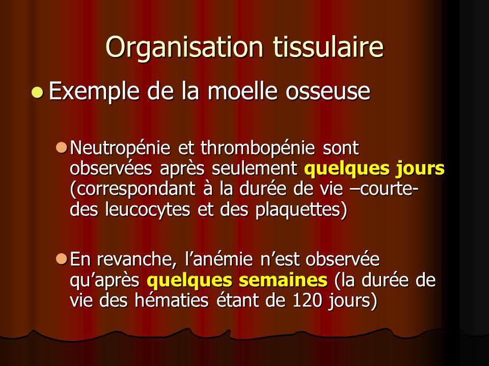 Organisation tissulaire Exemple de la moelle osseuse Exemple de la moelle osseuse Neutropénie et thrombopénie sont observées après seulement quelques