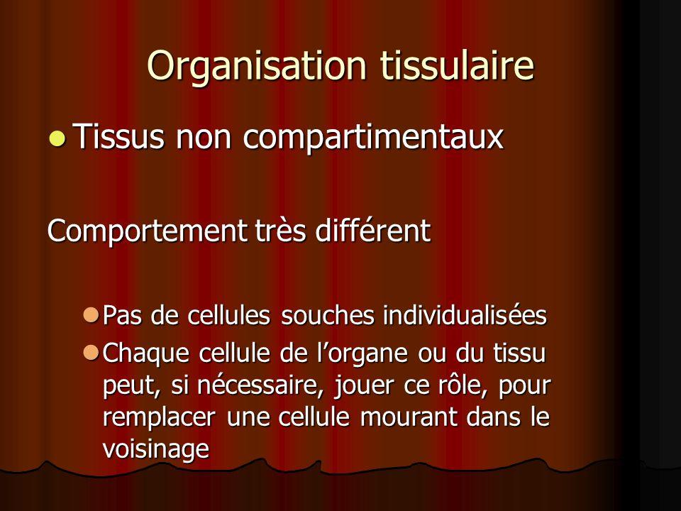 Organisation tissulaire Tissus non compartimentaux Tissus non compartimentaux Comportement très différent Pas de cellules souches individualisées Pas