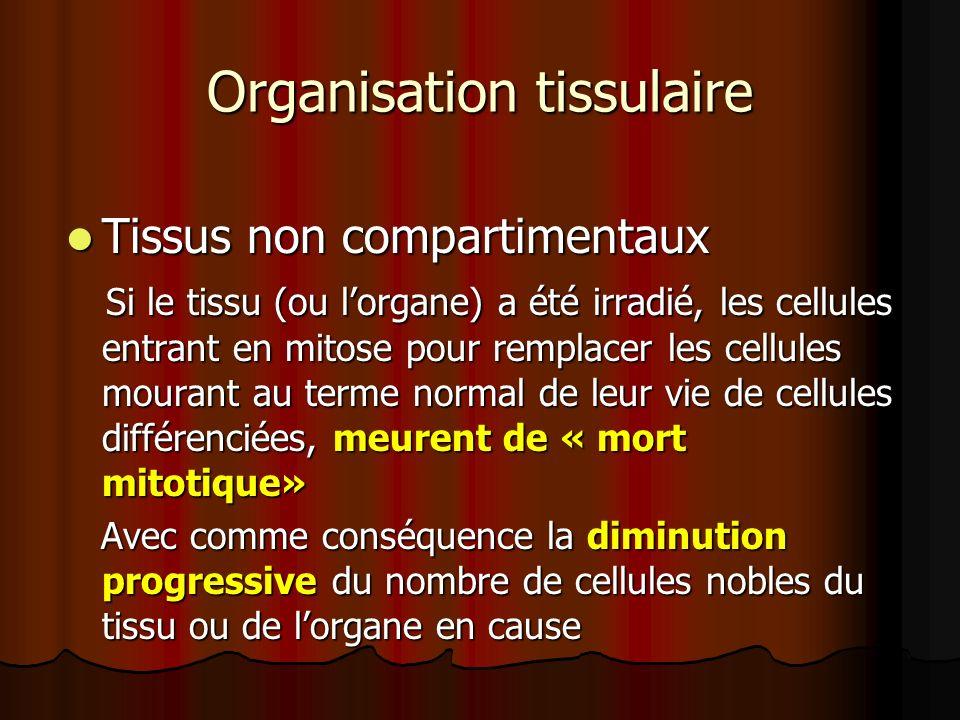 Organisation tissulaire Tissus non compartimentaux Tissus non compartimentaux Si le tissu (ou lorgane) a été irradié, les cellules entrant en mitose p