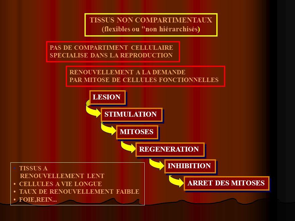 TISSUS NON COMPARTIMENTAUX (flexibles ou