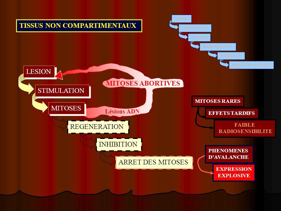 TISSUS NON COMPARTIMENTAUX LESION ARRET DES MITOSES STIMULATION MITOSES REGENERATION INHIBITION LESION STIMULATION ARRET DES MITOSES REGENERATION INHI