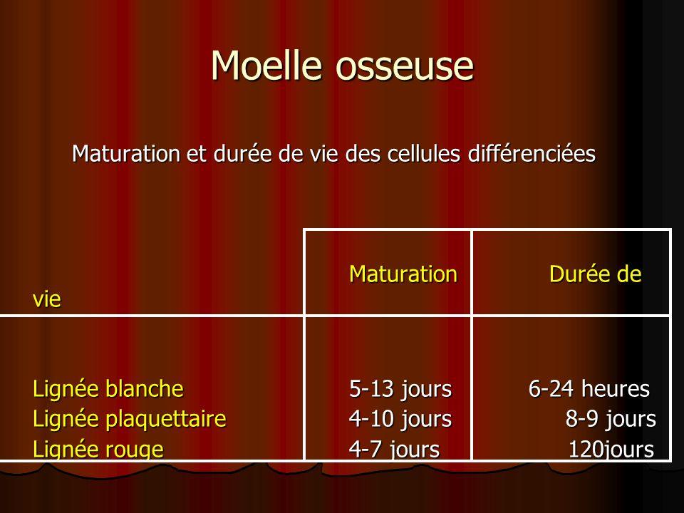 Moelle osseuse Maturation et durée de vie des cellules différenciées Maturation Durée de vie Lignée blanche 5-13 jours 6-24 heures Lignée plaquettaire