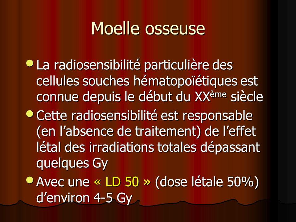 Moelle osseuse La radiosensibilité particulière des cellules souches hématopoïétiques est connue depuis le début du XX ème siècle La radiosensibilité