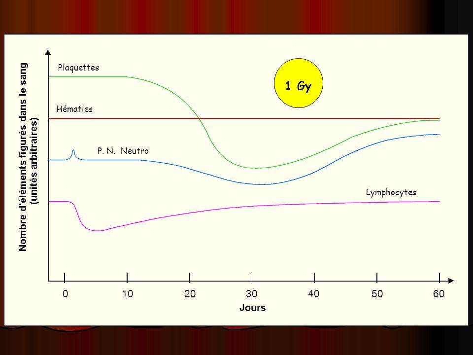 Nombre d'éléments figurés dans le sang (unités arbitraires) Jours 0102030604050 1 Gy Plaquettes Hématies P. N. Neutro Lymphocytes