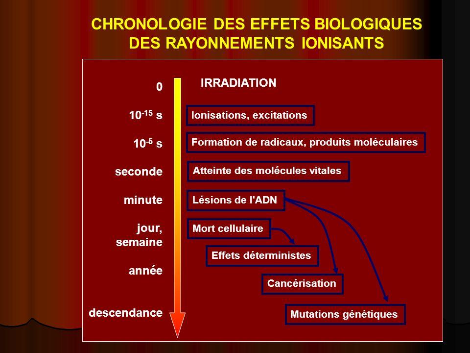 0 10 -15 s 10 -5 s seconde minute jour, semaine année descendance Ionisations, excitations Formation de radicaux, produits moléculaires Atteinte des m