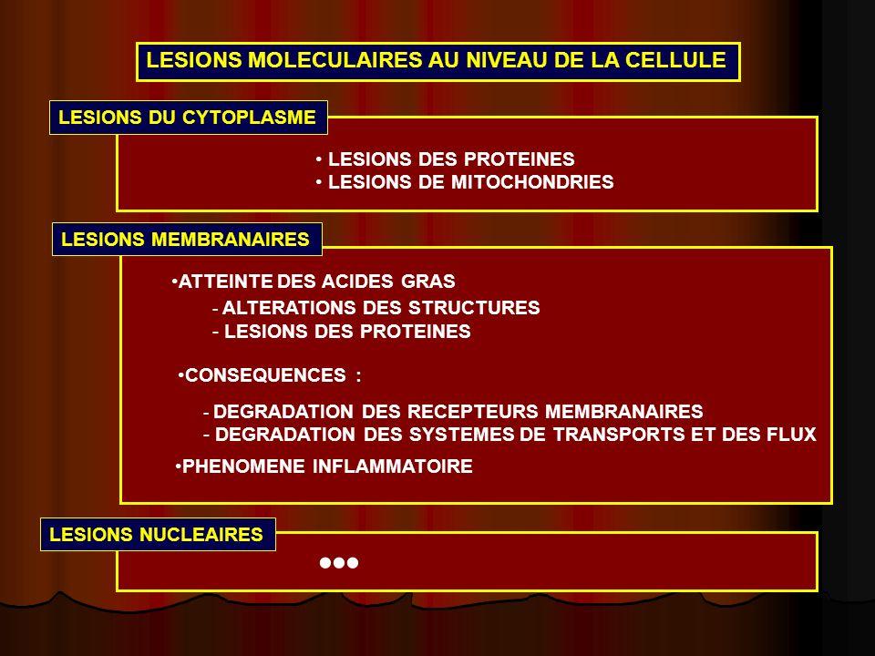 LESIONS MOLECULAIRES AU NIVEAU DE LA CELLULE LESIONS DU CYTOPLASME LESIONS DES PROTEINES LESIONS DE MITOCHONDRIES LESIONS MEMBRANAIRES ATTEINTE DES AC