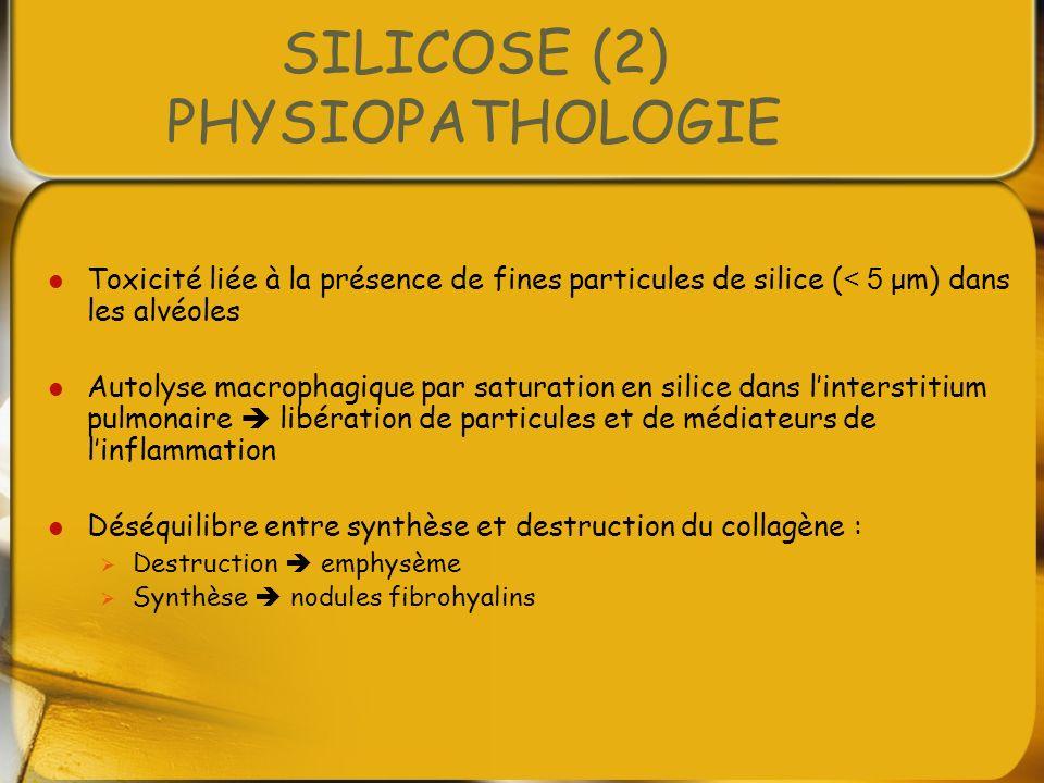 SILICOSE (2) PHYSIOPATHOLOGIE Toxicité liée à la présence de fines particules de silice ( < 5 μm) dans les alvéoles Autolyse macrophagique par saturat